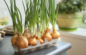 Ką reikia žinoti apie pirmąją sėją: kokias sėklas rinktis ir ką daiginti ant palangės?