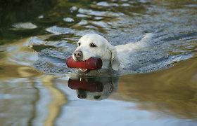 Dehidratacija itin pavojinga gyvūnų sveikatai. Kokia vandens paros norma?