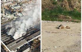 Alytaus gaisro žala gamtai jau patvirtinta: pirmoji auka – zuikis