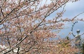 Drastiškai pasikeitė gegužės mėnesio prognozė – atšals