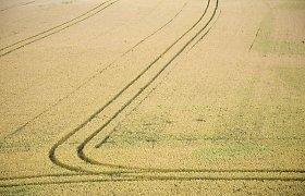 Ariamos žemės kaina auga