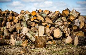 Lietuvos žaliųjų partija prašo Vyriausybės sumažinti metinę miškų kirtimo normą