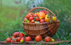 Žali pomidorai? L.Liubertaitė pataria, kaip juos greičiau sunokinti