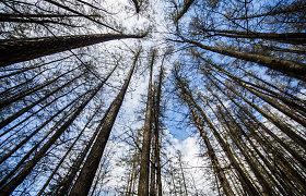 Testas prenumeratoriams: kaip gerai žinote Lietuvos gamtos rekordus – didžiausią ežerą, aukščiausią medį ir t.t.?