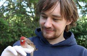 Ko mokslininkai ieško migruojančiuose paukščiuose?