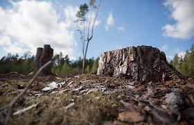 V.Pranckietis: valstybiniai miškai galėtų tiekti daugiau medienos