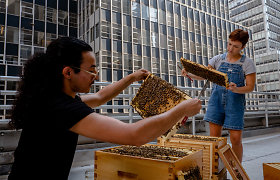 """""""NY Times"""": Po karantino biurai vilioja darbuotojus sugrįžti – net bitėmis ir medumi"""