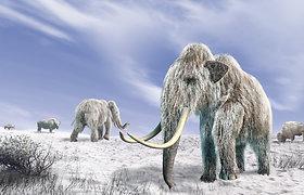 Svajojate išvysti gyvą mamutą? Gera žinia – tai gali įvykti