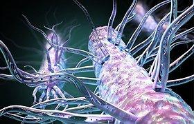 Mokslininkai atrado elektra kvėpuojančių bakterijų įjungimo ir išjungimo mygtuką