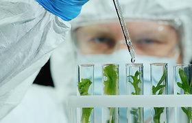 2020 metais Lietuvoje GMO neaptikta