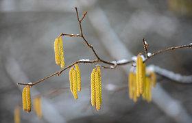 Paskutinis žiemos atsisveikinimas su gamta