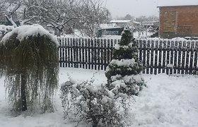 Net ir gegužę sniegas nesitraukia iš Lietuvos: žmonės fiksuoja žiemiškus vaizdus