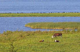 Gervės rudenėjančiame Žuvinto biosferos rezervate