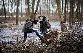 Iškirsti medžiai prie Rusnės