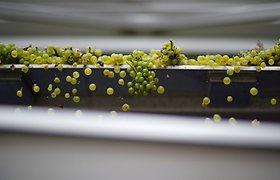 Prancūzijos vynų eksportas pernai sumenko 11,3 proc.