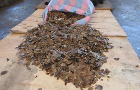 Kinijoje konfiskuota 12 tonų saugomų skujuočių žvynų