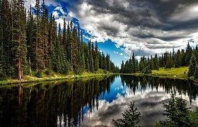 """Į """"piką"""" užkopusios miškų kainos viršūnėje ilgai nebesilaikys"""