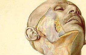 """""""Pernkopfo atlasas"""": pasaulio chirurgai vis dar naudoja nacių anatomijos knygą"""