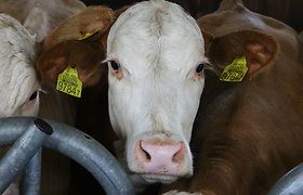 Ministerija: galvijų augintojams – mažiausiai 11 mln. eurų