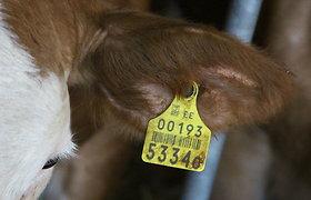 Dėl karantino sumažėjo galvijų supirkimas ir jų kaina