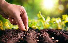Pavasarį ir akmuo kruta: agronomo patarimai, kad sodas būtų stiprus, žaliuotų ir žydėtų