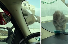 Netikėtas svečias nustebino vairuotoją: sulaukė dovanų pro automobilio langą