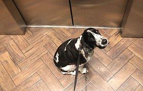 Neįprasta gelbėjimo operacija: įstrigo lifte su pavadėliu rankose, šuo – už durų