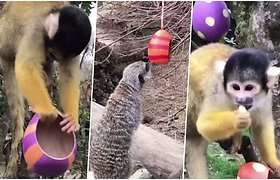 Zoologijos sodo gyventojai švenčia Velykas – smalsiai tyrinėja margučius ir ragauja skanėstus
