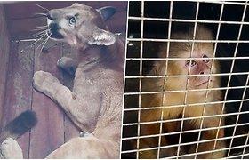 Iš nusikaltėlių gniaužtų ginkluotosios pajėgos išvadavo apie 100 gyvūnų