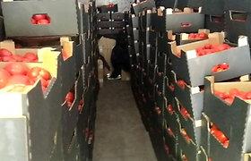 Išradingumas nepadėjo – pareigūnai sulaikė pomidoruose ir obuolių džeme slėptą kontrabandą