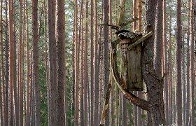 Atokiausias ir sunkiausiai randamas pažintinis takas Lietuvoje
