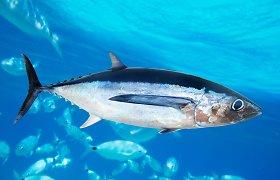 Trys iš penkių tuno rūšių nyksta – kaip padėti ir ką padaryti gali Lietuvos pirkėjai?