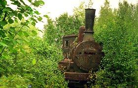 Stalino geležinkelis: lavonais pasirūpindavo laukiniai gyvūnai