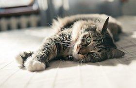 Agresyvus katinas terorizuoja daugiabučio gyventojus
