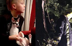 Įvykdyta netradicinė gelbėjimo operacija: ugniagesiai iš medžio traukė L.Šeškaus katę