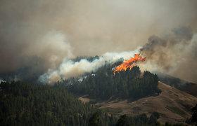 Gran Kanarijoje kilus miškų gaisrui evakuoti per 8 tūkst. žmonių