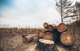 Latvija miško pramonės produkcijos eksportą 2020-aisiais sumažino 3 proc.