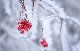 Sodo darbai... žiemą