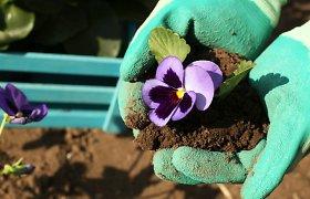 Gegužės mėnesio darbai sode ir darže