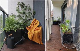 Sodas ir daržas daugiabučio balkone: ką būtina žinoti, norint juos įsirengti?