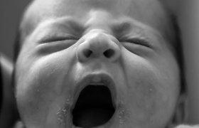 Su avimis išbandyta dirbtinė gimda gali padėti neišnešiotiems kūdikiams