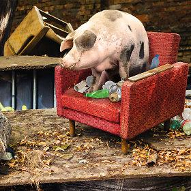 """""""Ieškome kiaulių"""""""