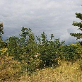 Ignalinos miškų urėdija