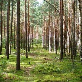 Gaižiūnų miškas