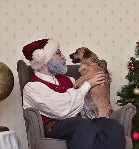 Prieš artėjančias šventes Senelis Kalėda pataria dėl dovanų: gyvūnas – ne žaisliukas