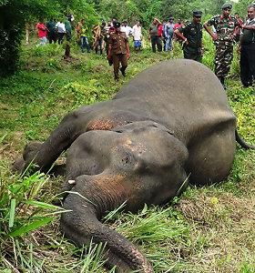 Šri Lankoje nužudyti dar trys drambliai