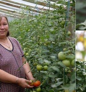Karštas oras palankus ne tik atostogoms, bet ir derlingam ūkiui