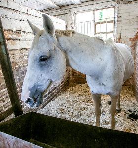 Olimpinę čempionę nešiojusio žirgo istorijos pabaiga – ar bus ištrauktas iš mėsmalės?