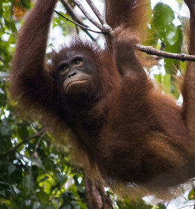 Žmogaus godumas prieš gamtą: dėl nereikalingos elektrinės paaukos žmonėms artimiausią gyvūnų rūšį