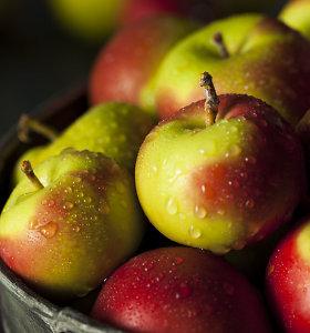 Dėl šalnų obuolių derlius gali siekti 20 proc. įprasto derliaus